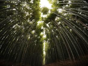Debunking Bamboo Myths