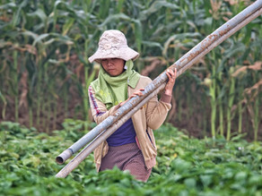 The Role of Bamboo in Empowering Women