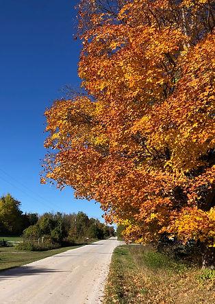 fall country road.jpg