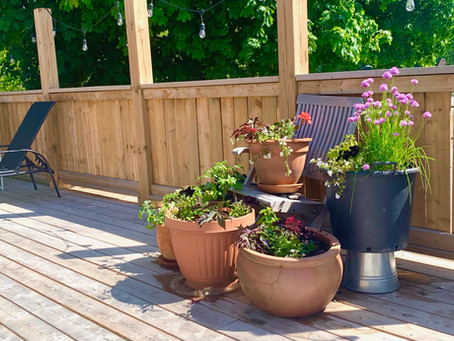 Spring has sprung, the pots are potted and The Deck awaits!