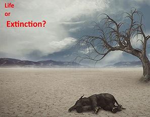 Life or Extinction_home.jpg