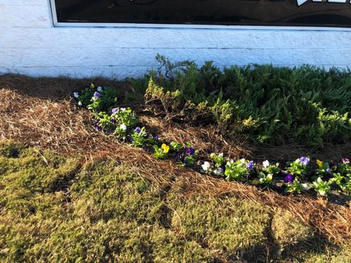 Spring plantings