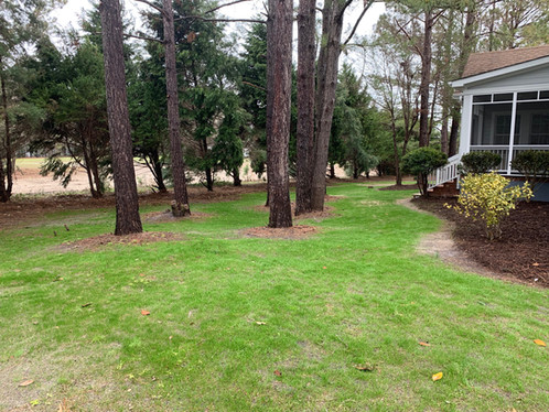 Overseeding can give new life to a dull yard if done properly.