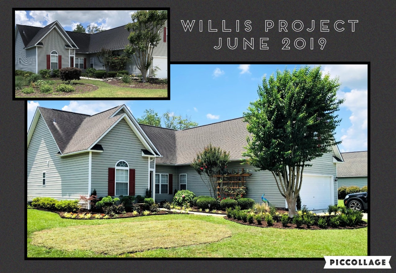 The Willis Project 2019
