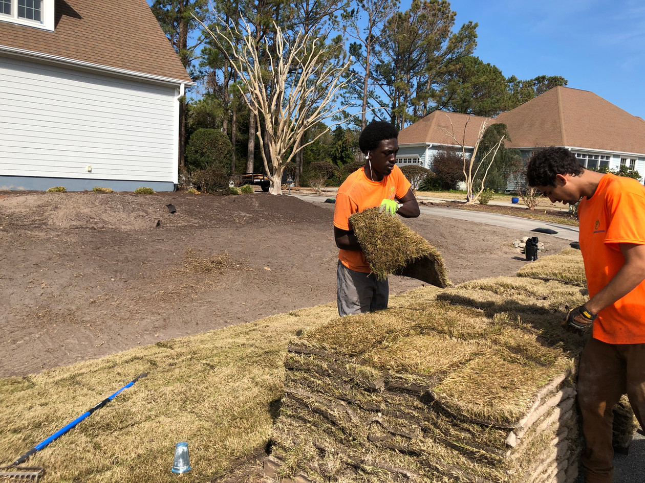 Hundreds of pieces of sod are laid.