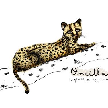 leopardus_.png