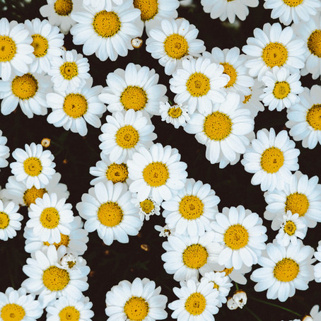 Flower Essences: a way to find your self