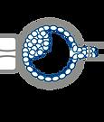 pgd-ico-Embryo-Biopsy@2x.png