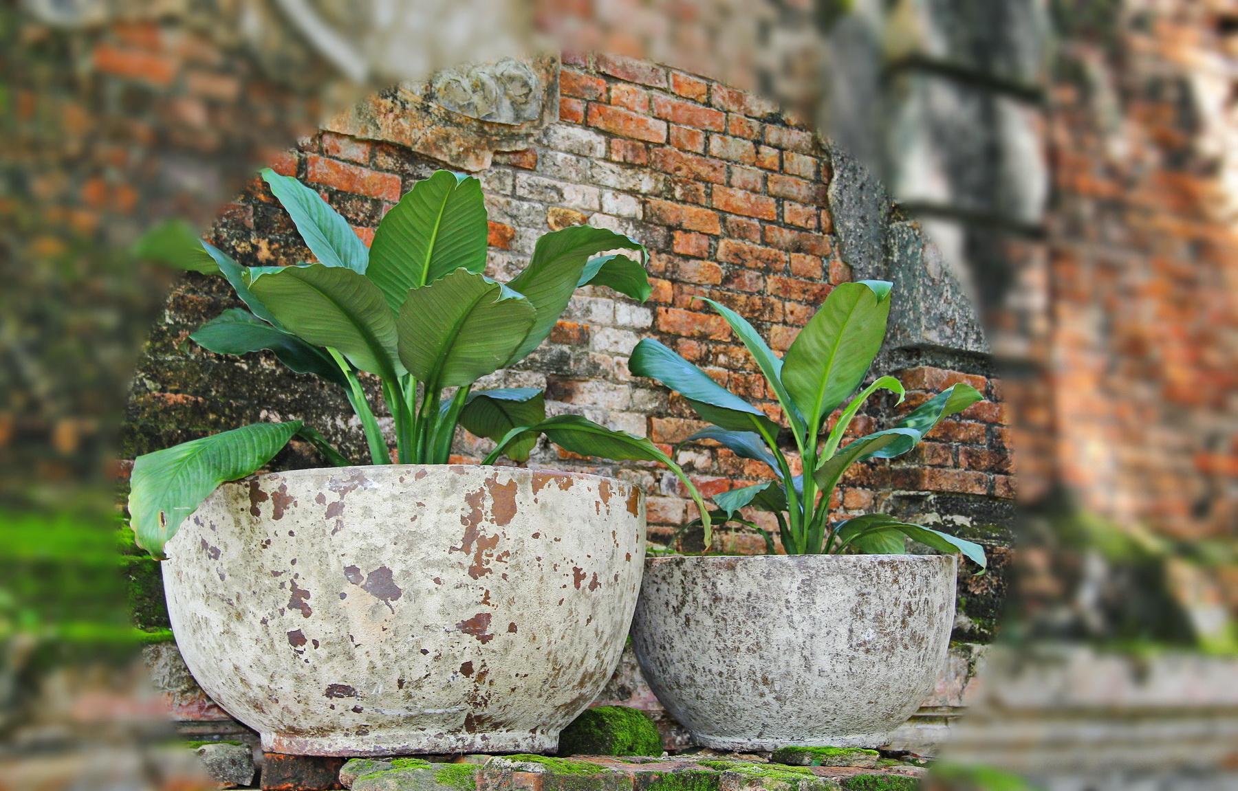 Vietnam ceramic, pottery 04