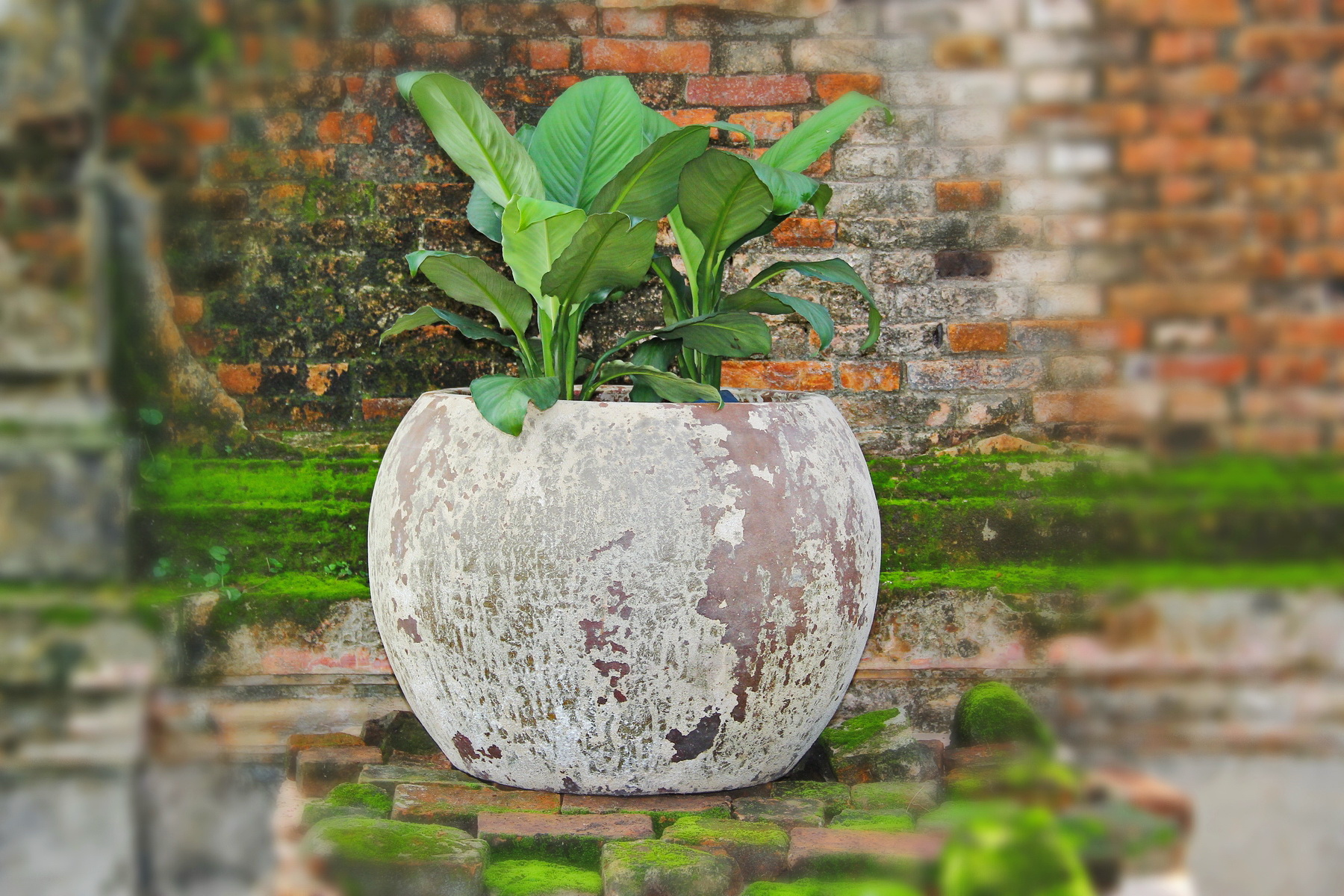 Vietnam ceramic, pottery 02