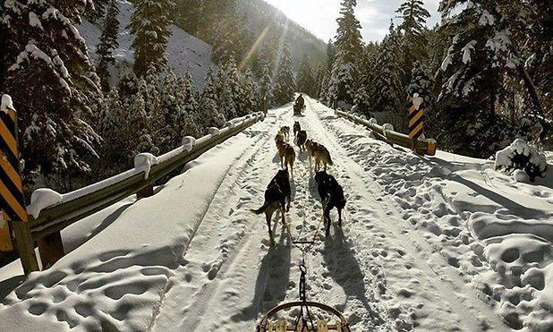 yellowstone dog sledding.jpg