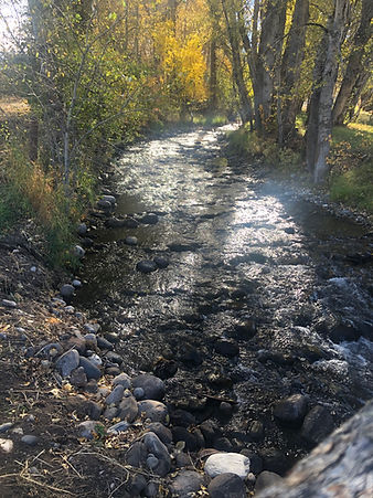Cottonwood Creek.jpg