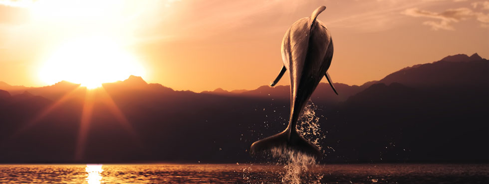 DOLPHINS WILD & FREE !