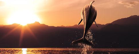 Gibraltar dolphins