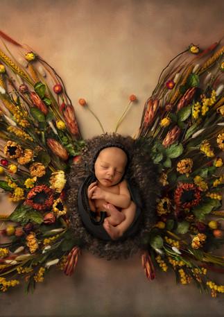 Central Florida Newborn Photographer