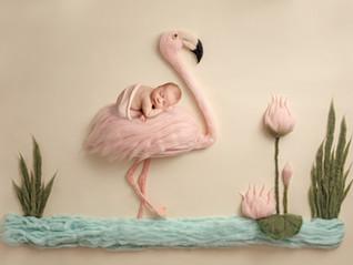 Flamingo Baby - Newborn Photographer Merritt Island Florida