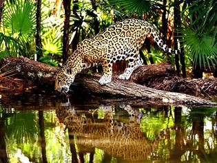 AMAZONIA 2019