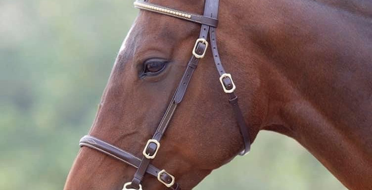 Blenheim Clincher In-Hand bridle