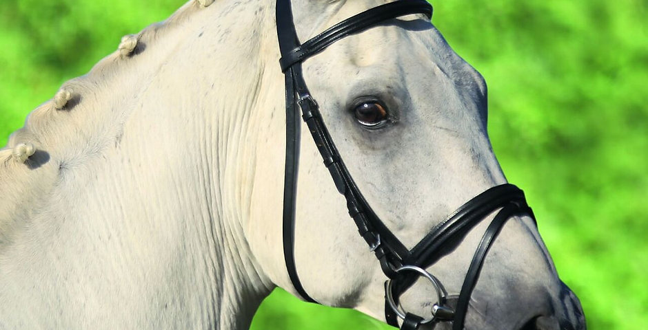 STAR Lifestyle Bridle