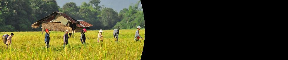 CTA-Rice-Association-Organization.png