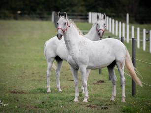 In Arbesthal genießen die Pferde ihre Pension