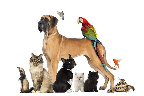1 hour Healing and Clearing for pets and animals by phone or Skype