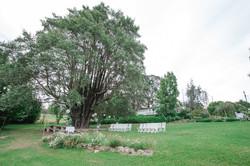 The Turpentine Tree