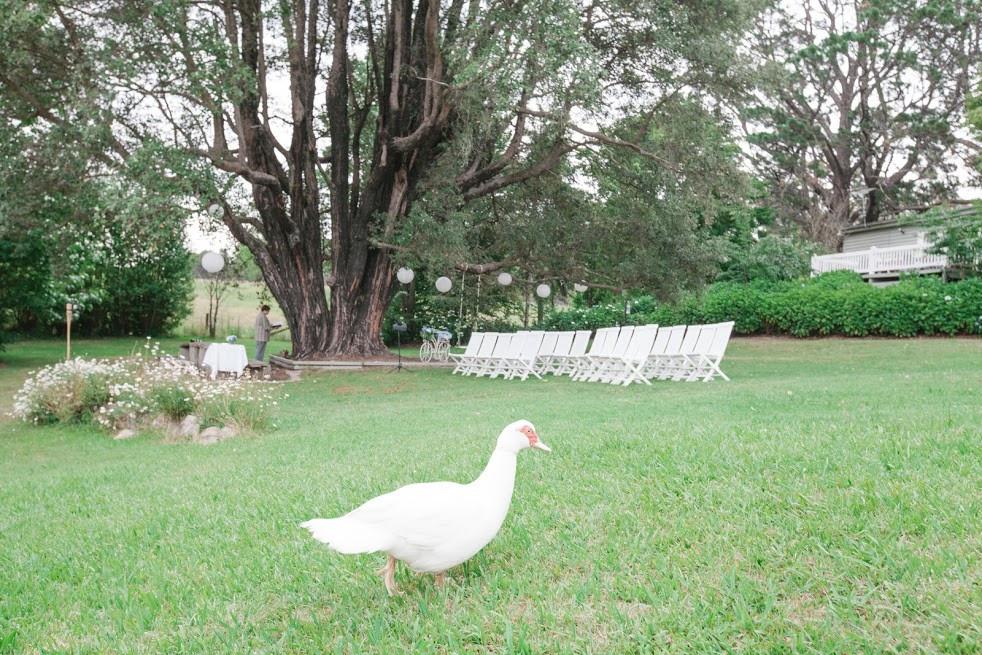 Sydney garden wedding ceremony, The Turperntine Tree, Kurrajong