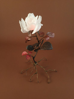Long stem rose 2017