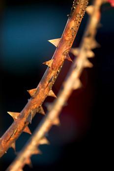 thorns (2006)