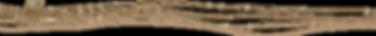 Käfer_auf_linie_klein_freigestellt.png