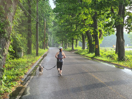 Running and Walking with Your Dog - Summer Edition