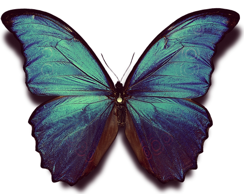 Butterfly Alone EDITED.png