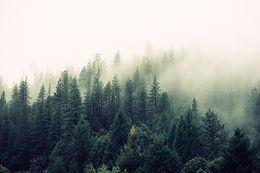 Robotto skov