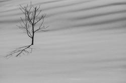 Alone  Black & White-1