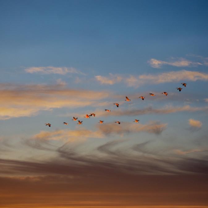 Orangr Birds.jpg