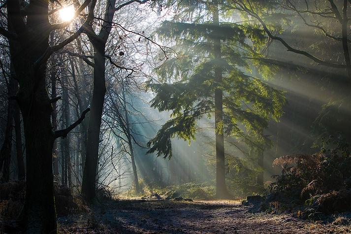 Oakley Woods Fairy Tale