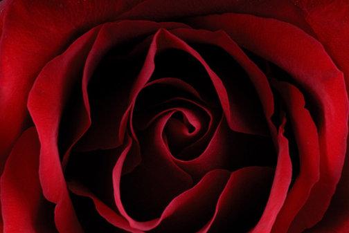 Inside the Rose - C107