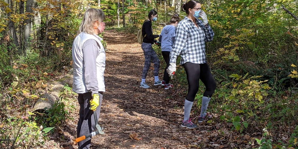 Invasives cleanup at Rockfall Forest in Middlefield