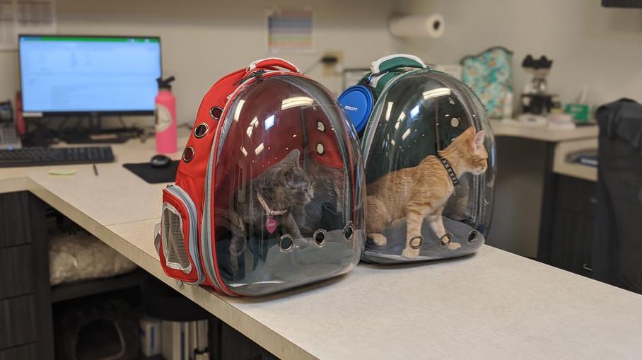 Astronaut Kittens!