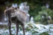 Glendalough 30.jpg