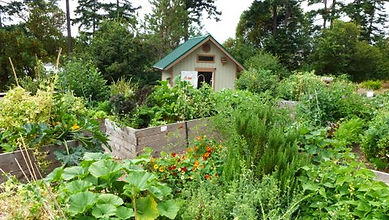 Shed and Gardens