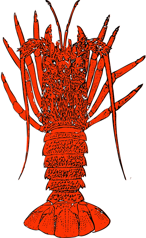 lobster illustration.png