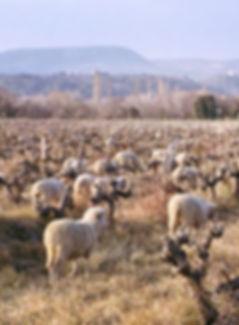 vignoble sud grignan les adhémar vallée du rhône côtes du rhône moutons vin de pays