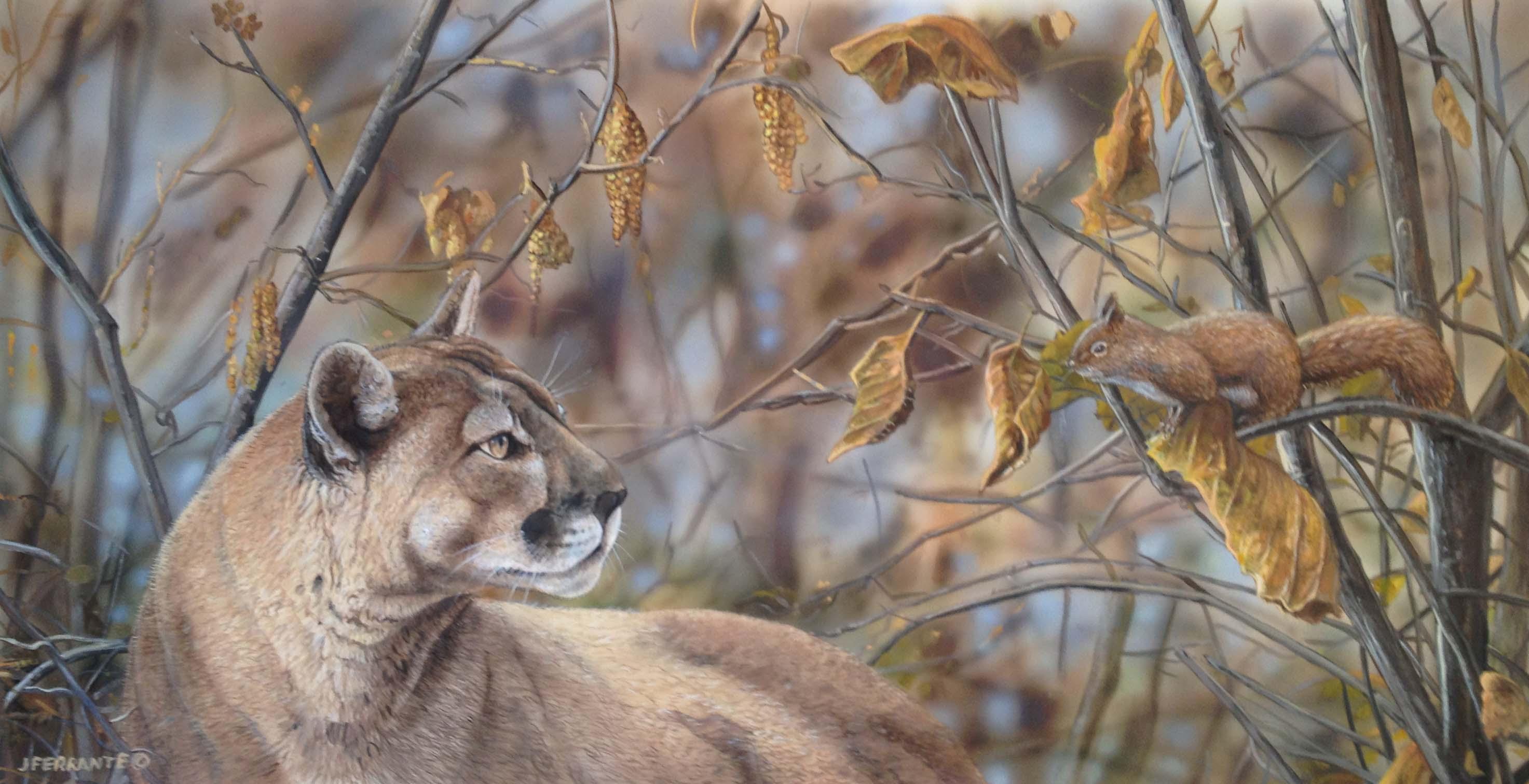 Cougar - the intruder