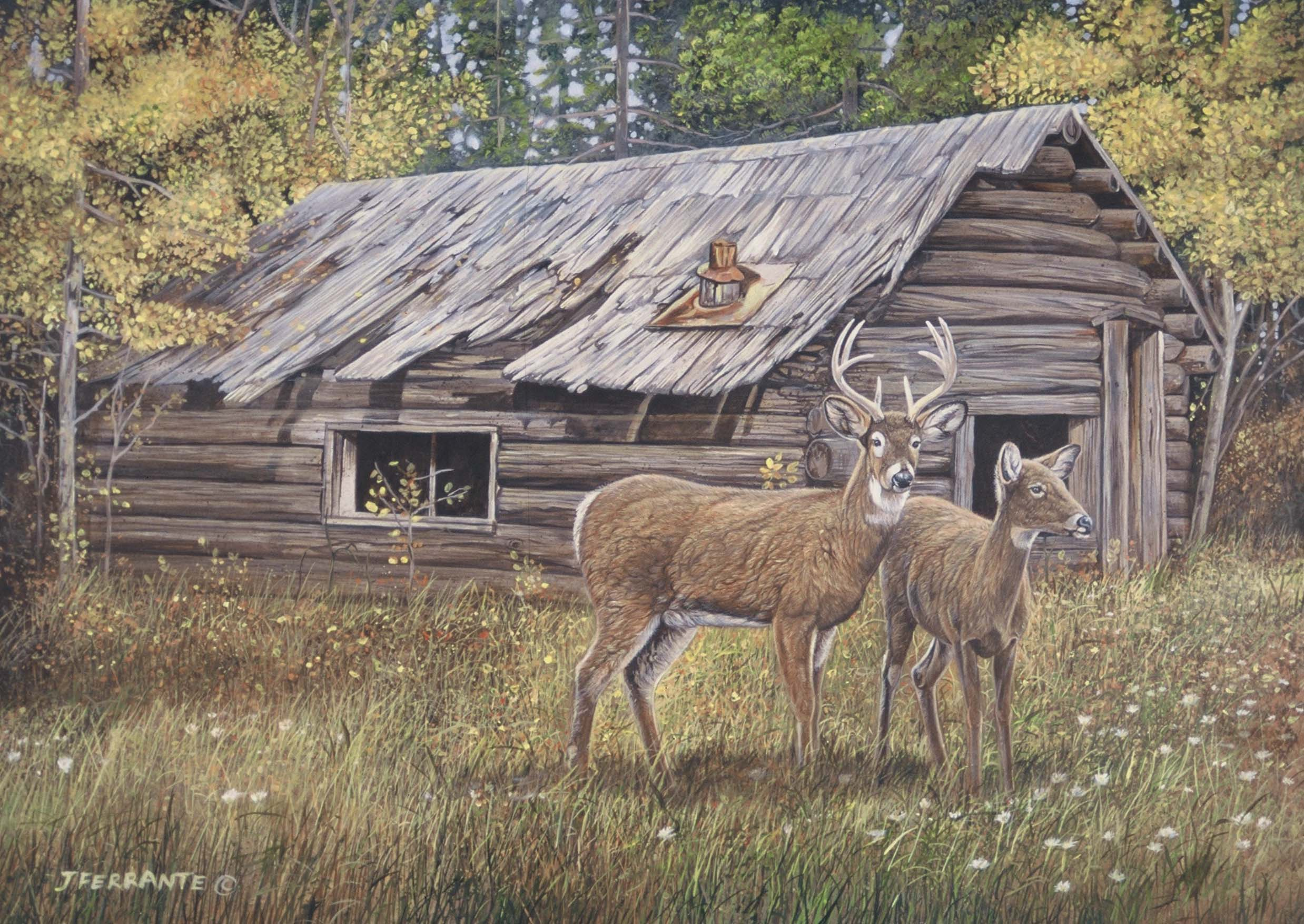 Whitetails at cabin