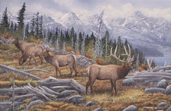 Elk in the Rockies