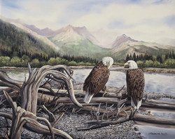 2 bald eagles