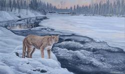 Cougar at winter creek