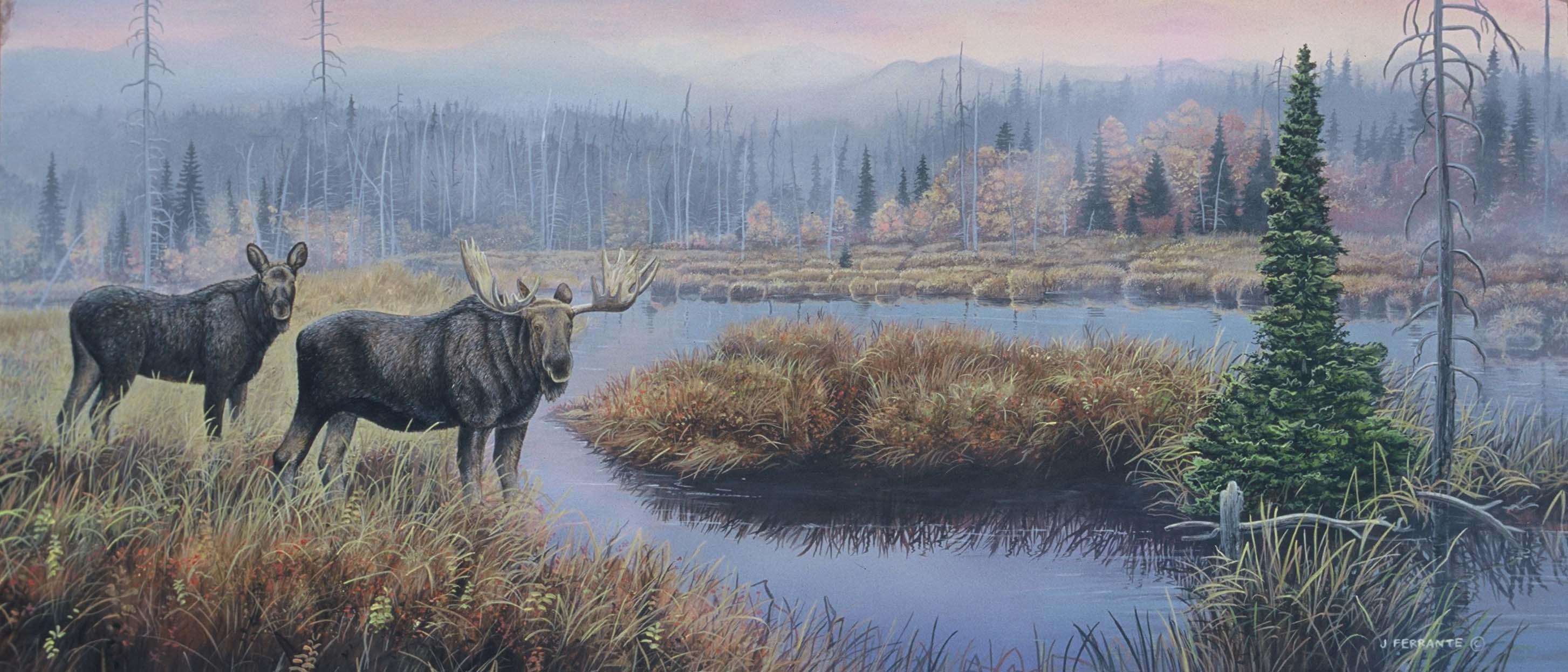 Bull & cow moose